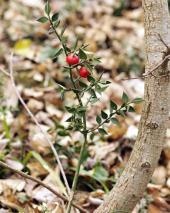 Vedi le foto di Flora del Veneto
