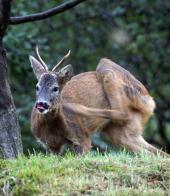 Vedi le foto di Fauna del Veneto