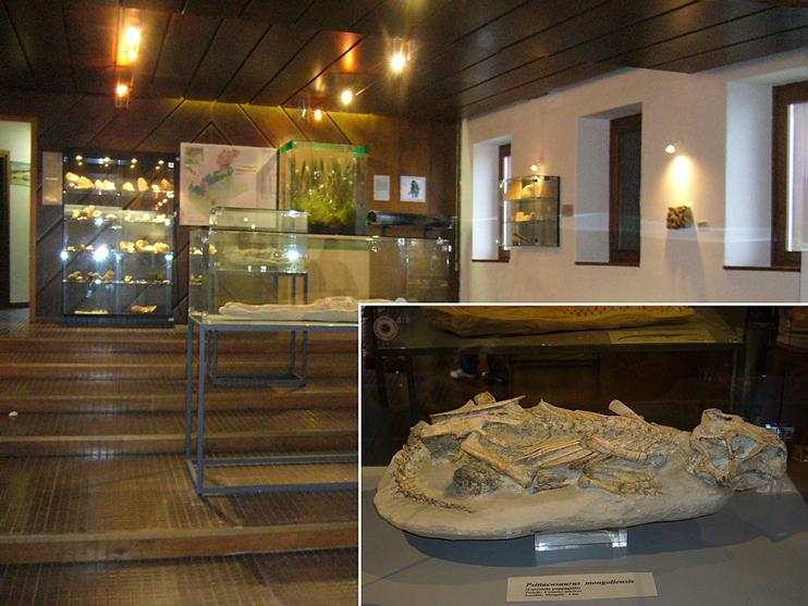 """Danta di Cadore (Bl), Museo paleontologico """"Le radici della vita""""."""