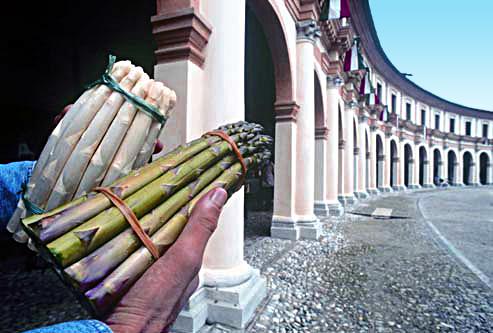 Prodotti tipici, Asparagi di Badoere IGP.