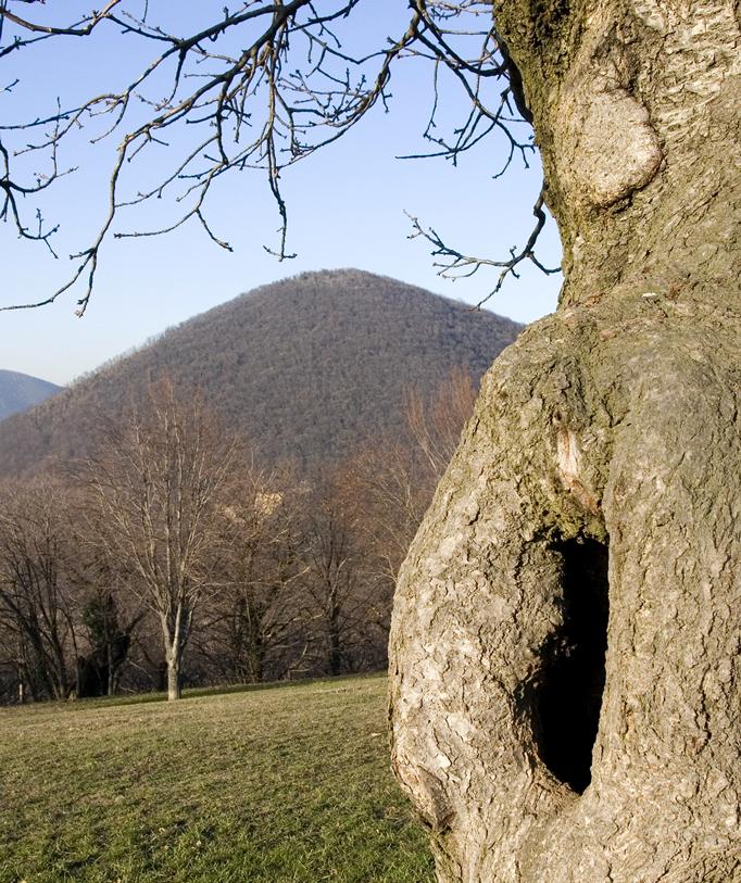 Parco Regionale dei Colli Euganei (Pd), Paesaggio sui Colli Euganei