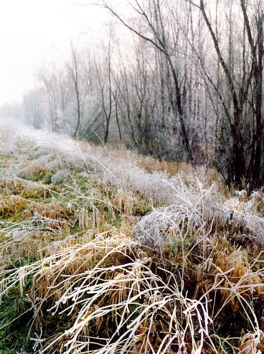 Parco Regionale Veneto del Delta del Po (Ro), Paesaggio invernale.