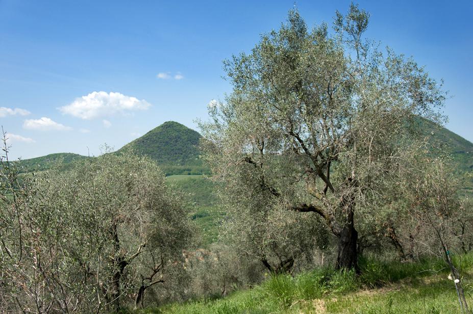 Parco Regionale dei Colli Euganei (Pd), Paesaggio sui Colli Euganei.